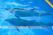 Морские животные дельфинария Немо