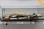 Моржовая кость в музее рыбы и рыболовства в Феодосии -  Крым
