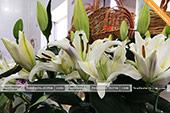 Лилии под заказ
