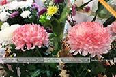 Цветы в Феодосии
