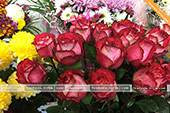 Розы разных цветов